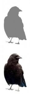 humane bird control